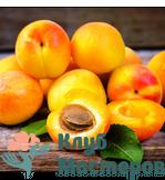 Масло абрикосовых косточек рафинированное