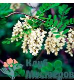 Гидролат (цветочная вода) Акации