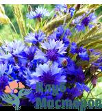 Гидролат (Цветочная вода) Василька