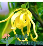 Гидролат (цветочная вода) Иланг иланг
