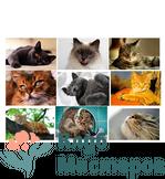 Кошки 1