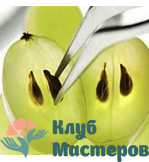 Масло виноградной кости водорастворимое